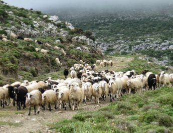 Νέα ημερομηνία υποβολής των αιτήσεων στην πρόσκληση της βιολογικής κτηνοτροφίας