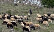 Υπενθύμιση της περιφέρειας Θεσπρωτίας για τις αιτήσεις για τις βοσκήσιμες εκτάσεις